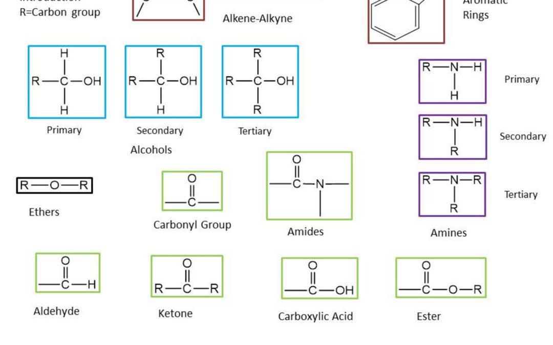 Interactive Study Sheet